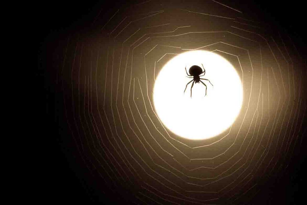 How I Was Trapped in the Scary World of the Dark Web