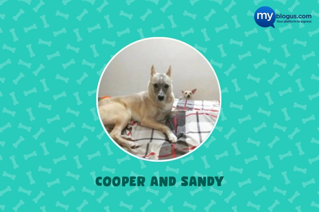 Indie Dog Cooper and Sandy