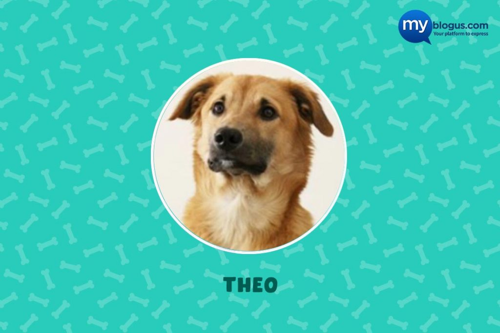 Indie Dog Theo
