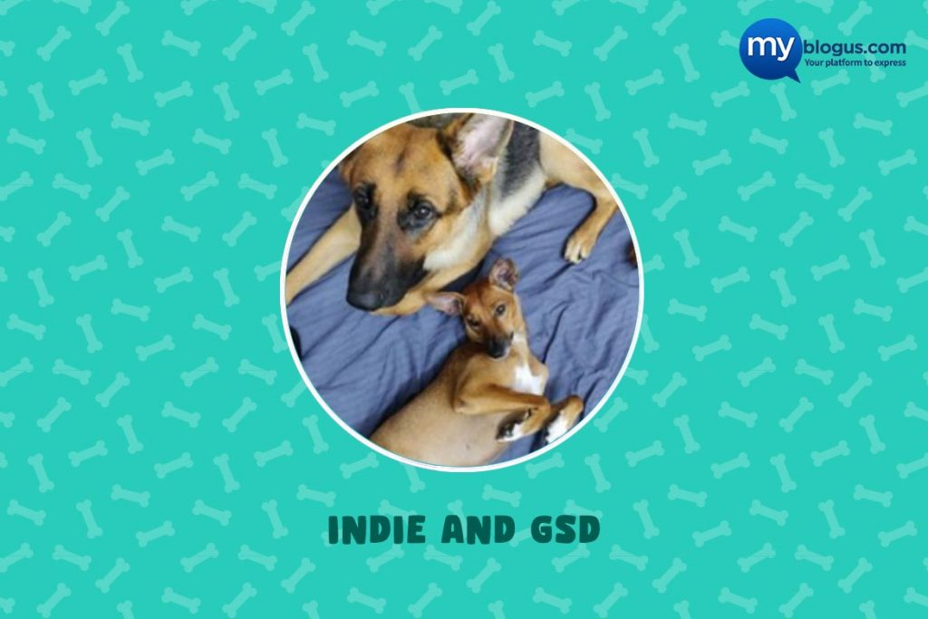 Indie Dog - Indie and GSD